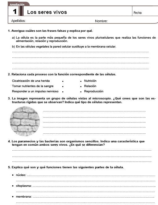 Inglés – Segundo Y Tercer ciclo primaria (3º – 4º y 5º- 6º ...