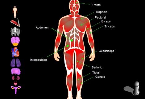 La clase del maestro de Educación Física: Anatomía
