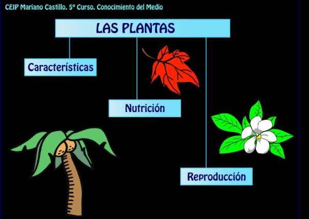 webquest plantas catedu
