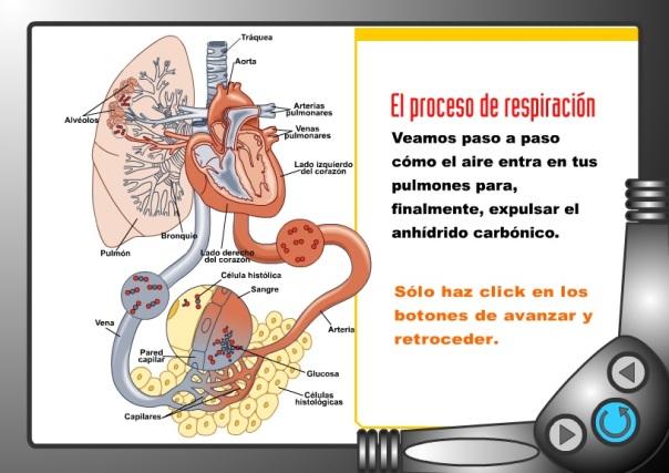 aparato respiratorio icarito