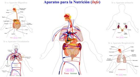 nutricion animada